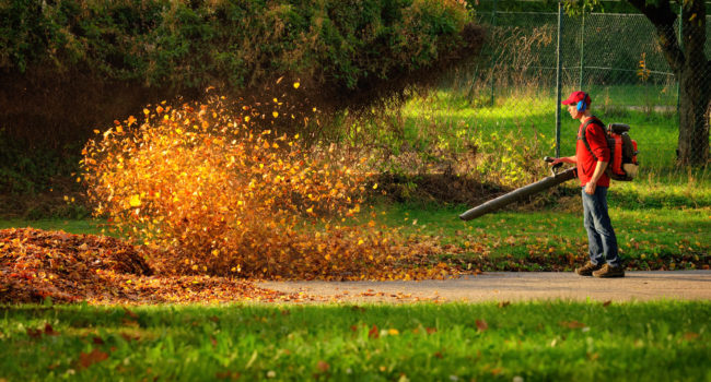 blowing-fall-leaves