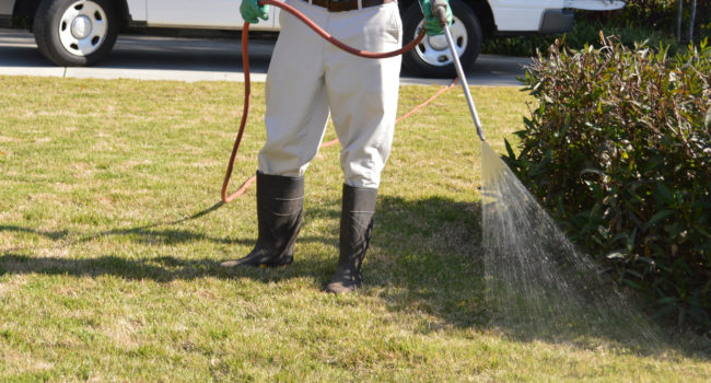 Professional Lawn Spraying